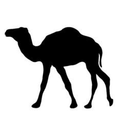 Animal Kingdom Radio 005 – Camel
