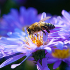 Animal Kingdom Radio 027 – Honey Bee